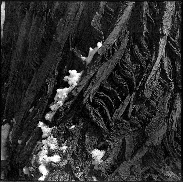 Śnieg na korze, cz-b, zima we wrocławiu, kiev 66, volna 80mm f8, zima w parku, park, kora, drzewo, czarno białe, format 6x6, średni format.