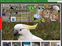 Papagaio do Congo e Cacatua