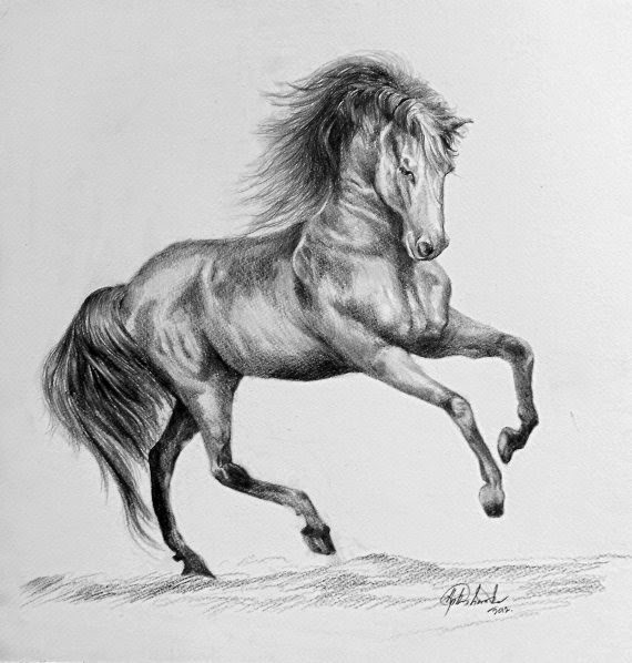 A horse achalas drawings members drawing