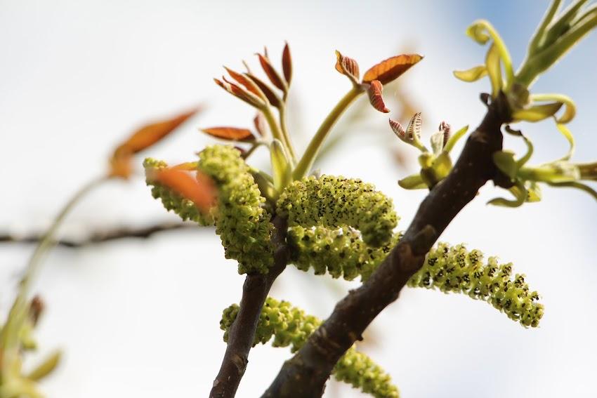Primavera al Mussol