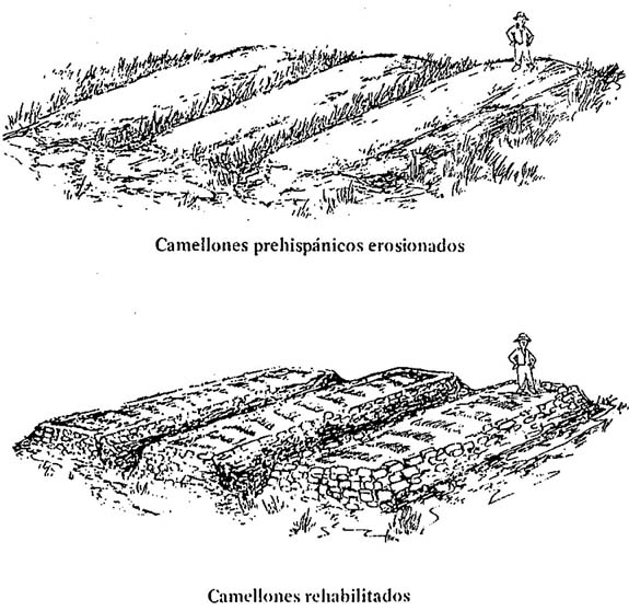 Wide urban world modern use of an ancient farming system for Terrace farming diagram