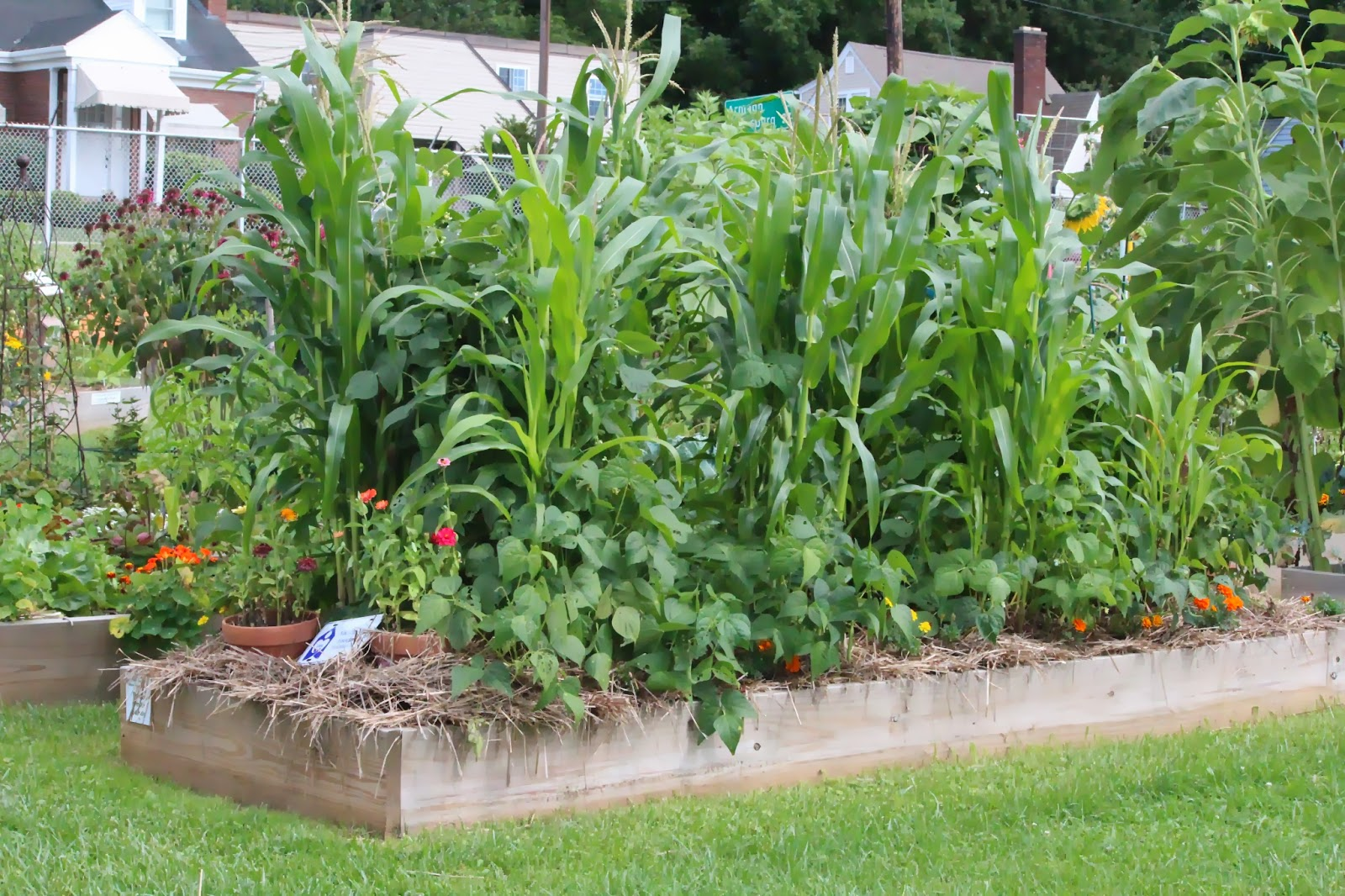 Indiana community garden culture Sisters garden