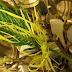 Wielkanocna palma A.D. 2015