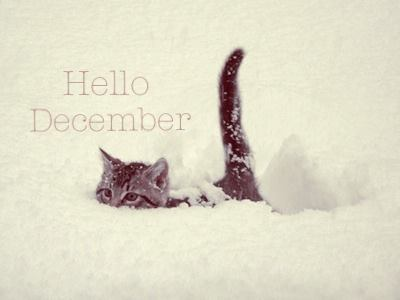 cute Hello December card with lovely kitty in the snow
