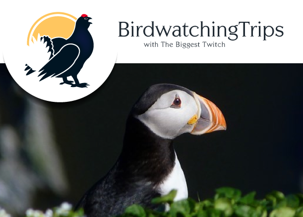 Birdwatching trips