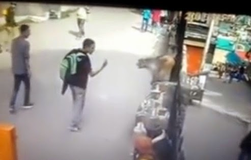 Monkey attacks after getting flipped off