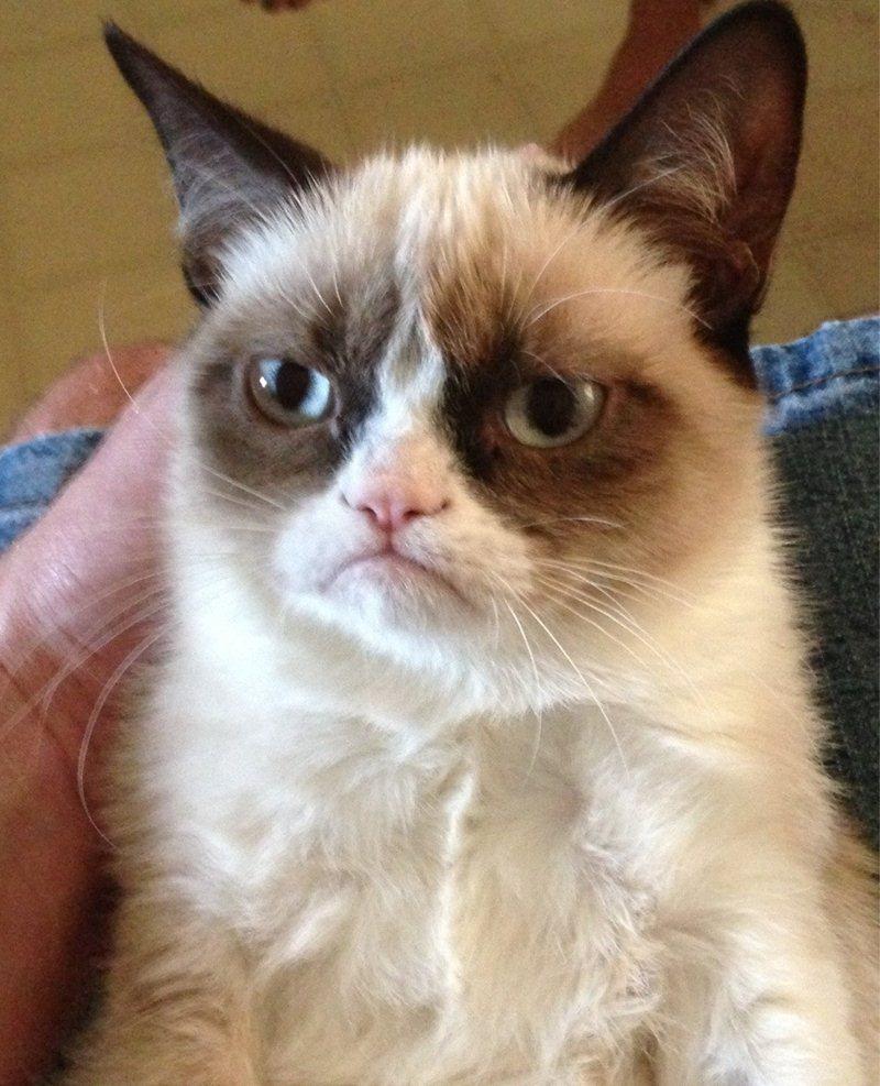 funny cat pictures, sad cat