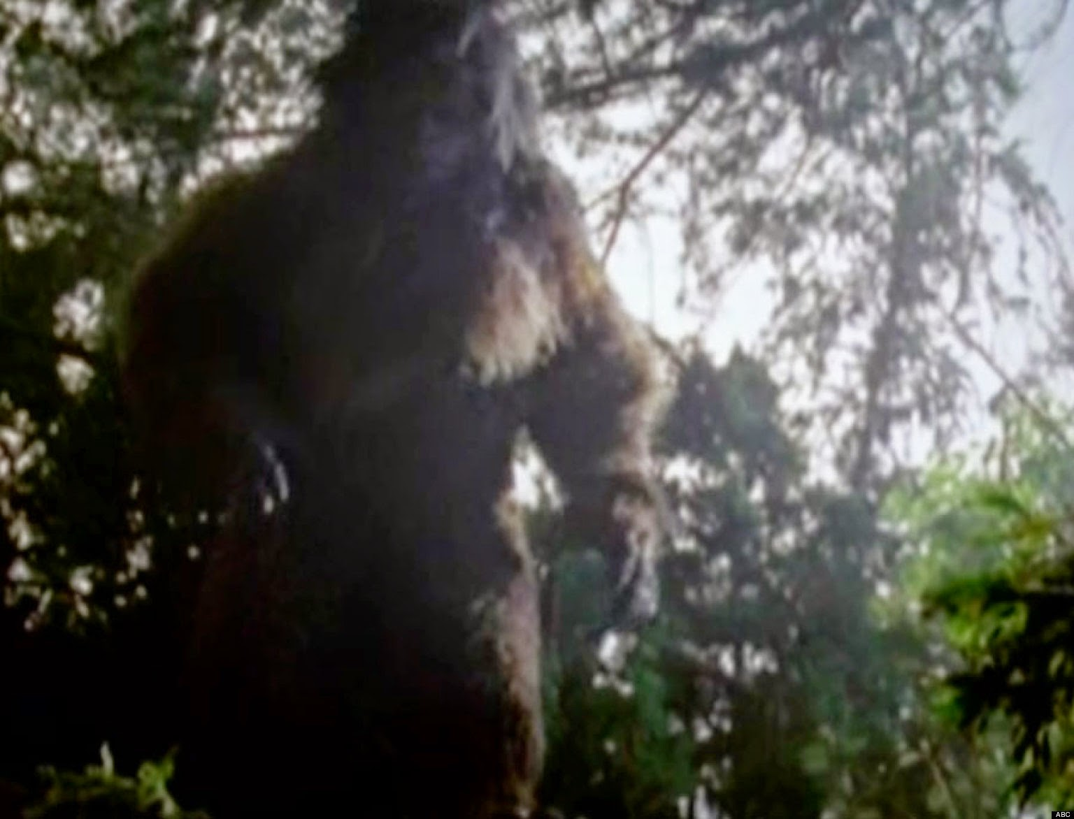 an argument in favor of existence of big foot yeti and sasquatch Big foot essay examples big foot, yeti and sasquatch 909 words 2 pages an argument in favor of existence of big foot, yeti and sasquatch 915 words.