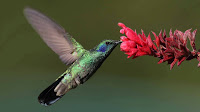 Hummingbird Photo and Picture 17