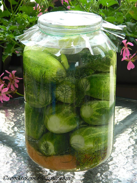 Kvasené uhorky - rýchle