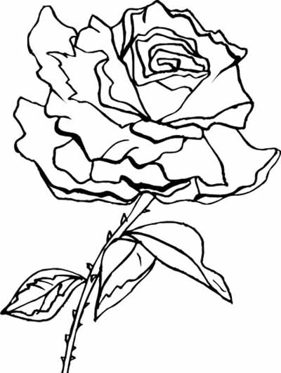 Rose Vine Coloring Pages Coloring