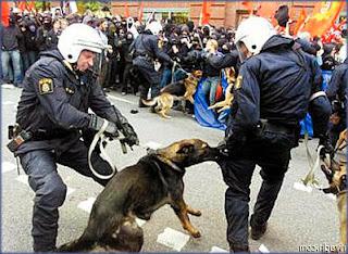 تدريب الكلاب البوليسية