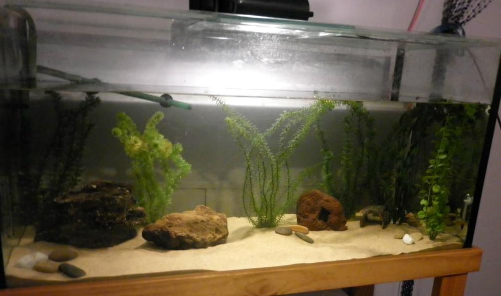 Axolotl Aquarium