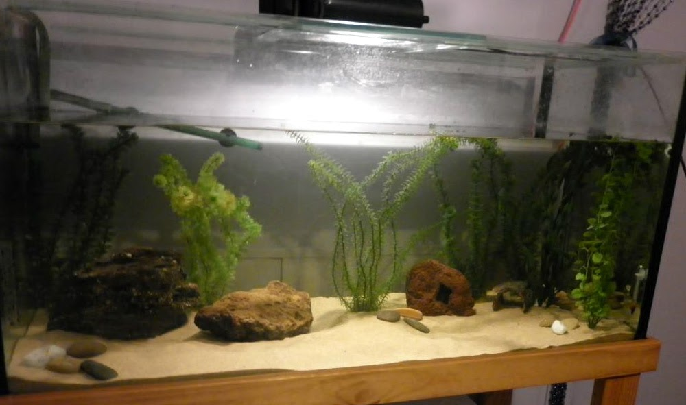 All about axolotls axolotl care for What do you need for a fish tank