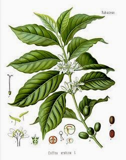 frutas y verduras que tengan acido urico nivel normal de acido urico serico acido urico gota
