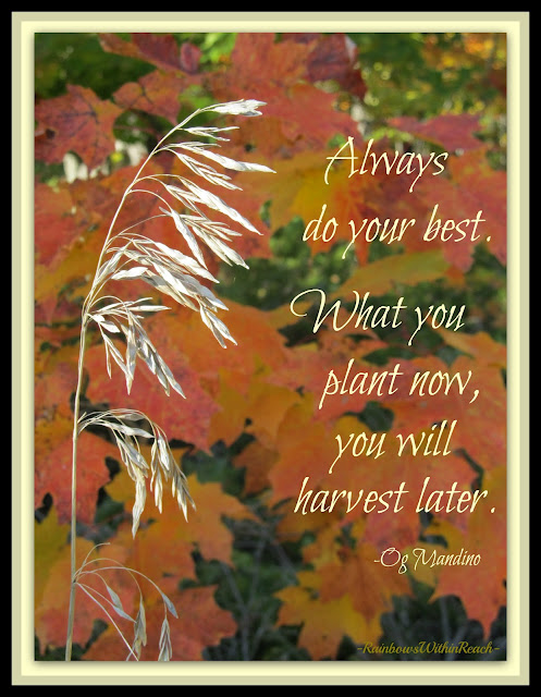"photo of: Autumn Quote: ""What you plant now, you will harvest later."""