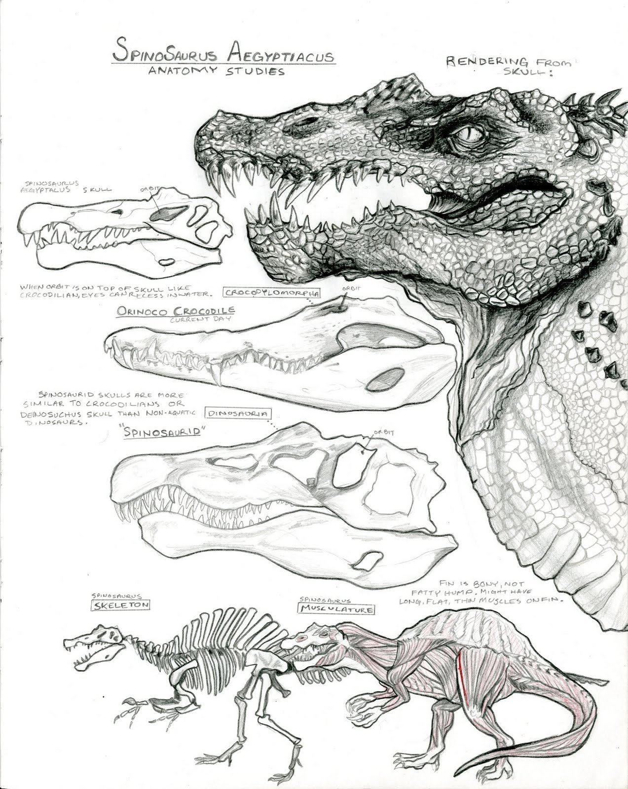 the art of cody raiza  anatomy studies and dinosaur friends