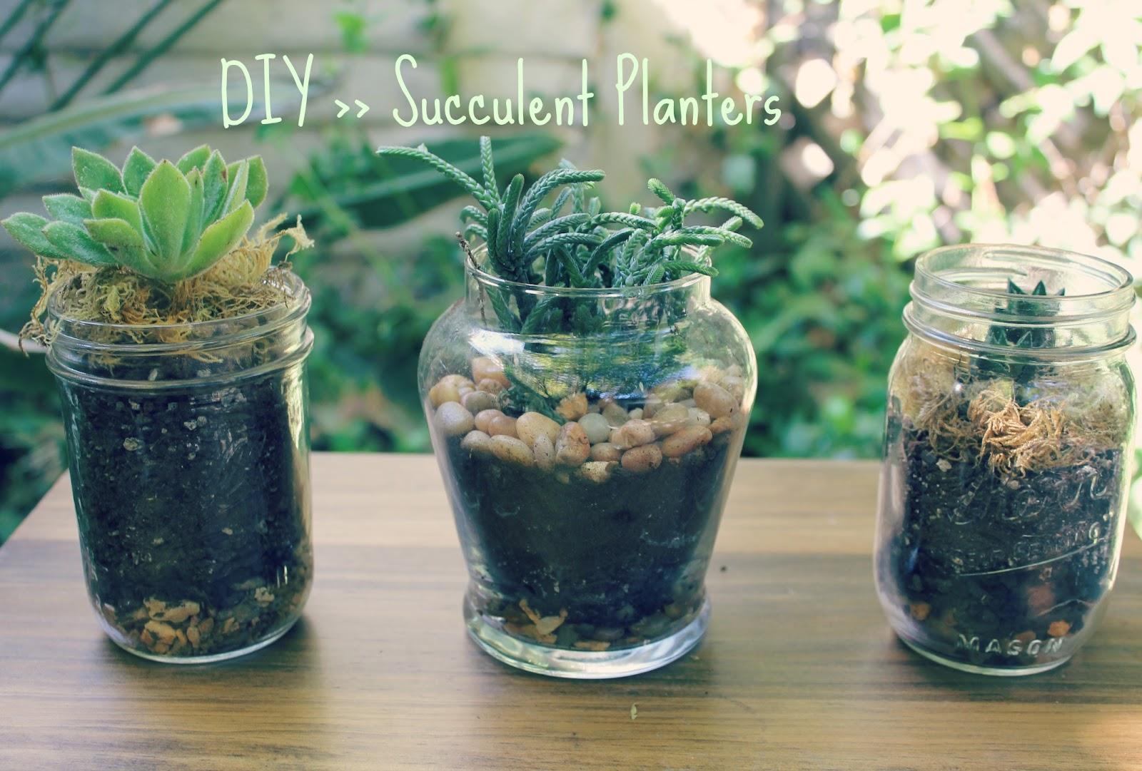 Abhaya diy succulent planters Planters for succulents