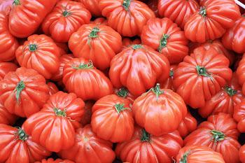 coeur de boeuf tomaten