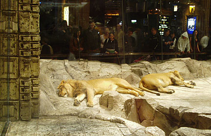 lions at the mgm grand las vegas