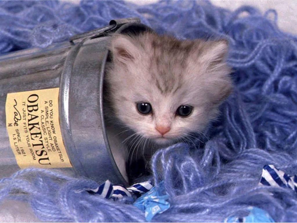 Cute cat funny