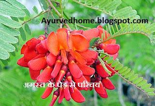 अगस्त पौधे के फूल का औषधीय प्रयोग