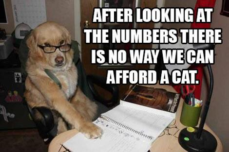 No Way We Can Afford A Cat
