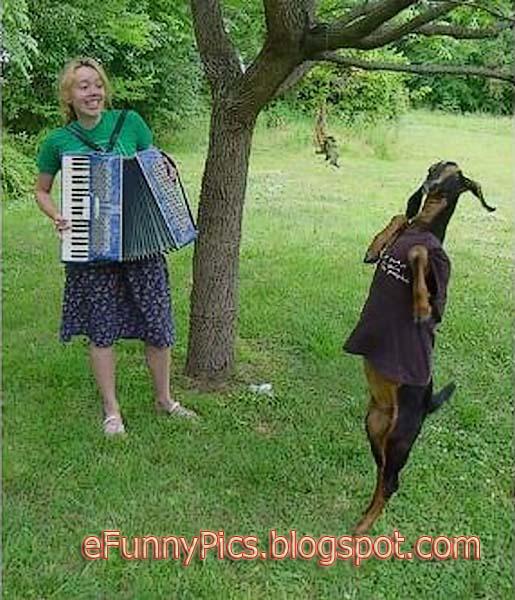 Goat Dance