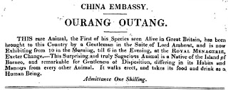 Advertisement from Ackermann's Repository (Sept 1817)
