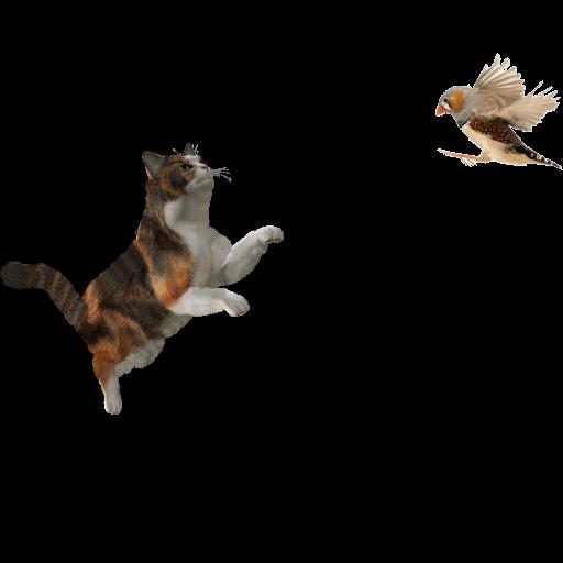 Cat- Brid 3