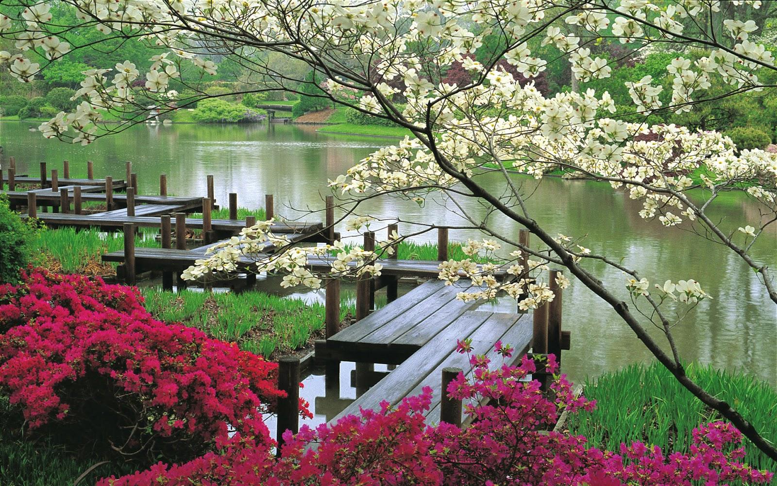 Hình Nền Thiên Nhiên về Hoa