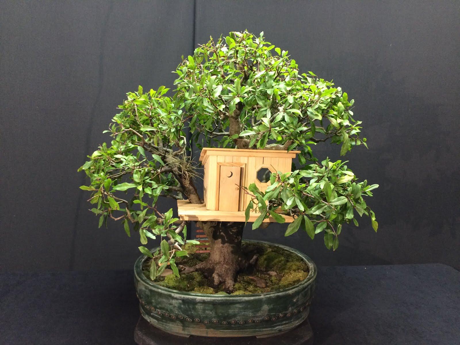 Building A Treehouse Water Oak Bonsai Journeys