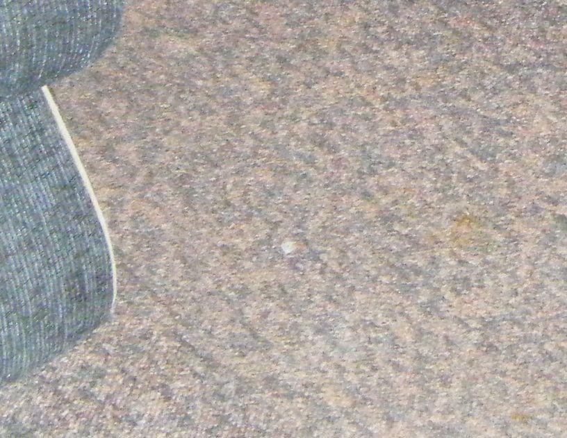 poop on carpet how to clean