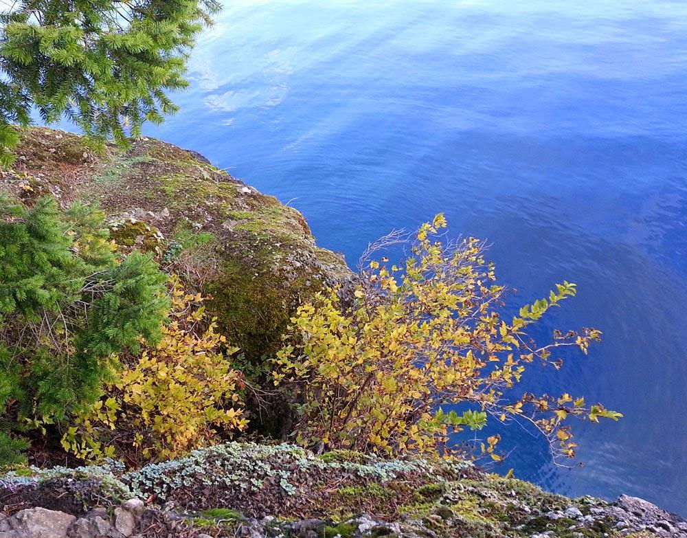Back to the Land - Toandos Peninsula, WA: Lake Crescent, WA visit: back2theland.blogspot.com/2014/11/lake-crescent-wa-visit.html