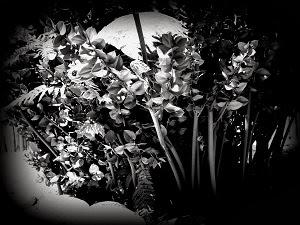 Trepar aos arbustos