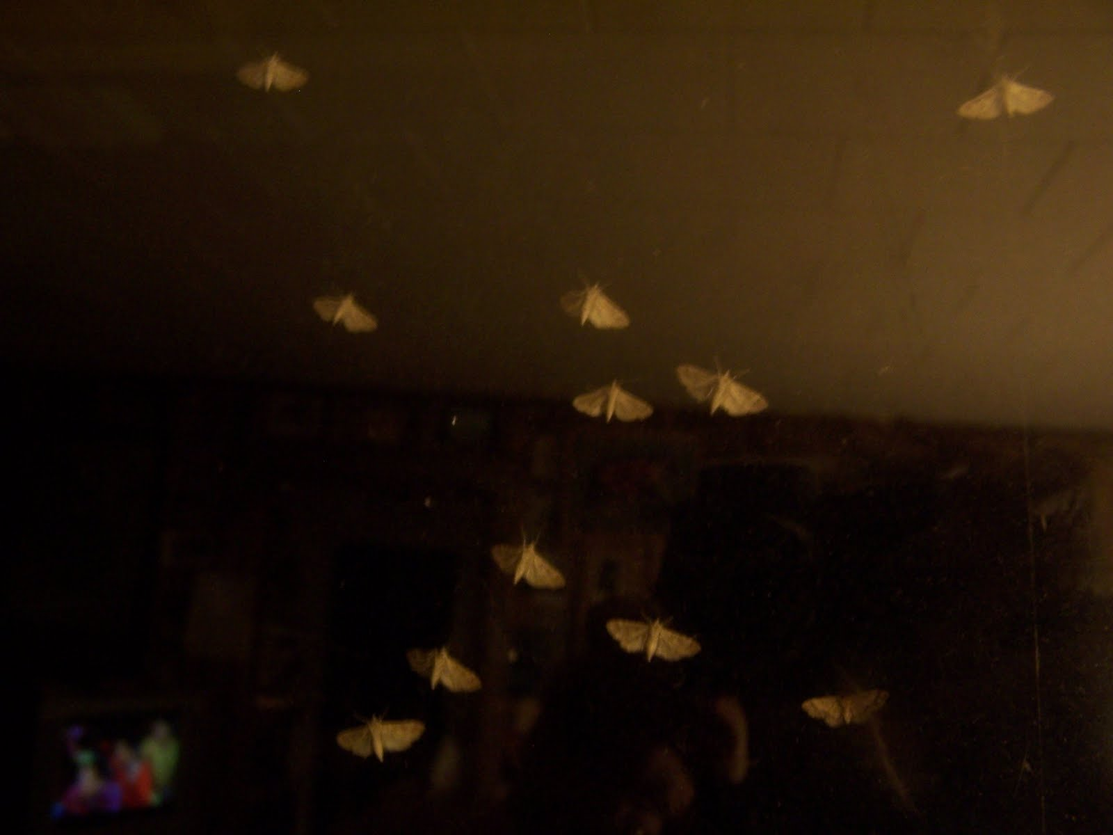 Small Moths In Bedroom The Nature Dude Time Of The Moth