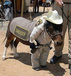 mini-horse, sheriff, lil sebastian, dressed up, mascot