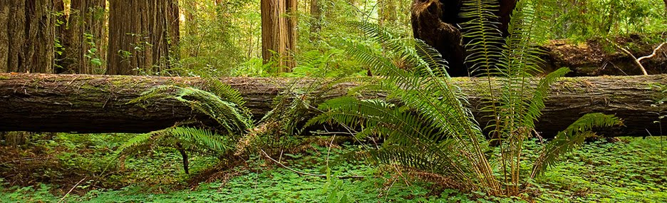 Redwood Forest Vacations