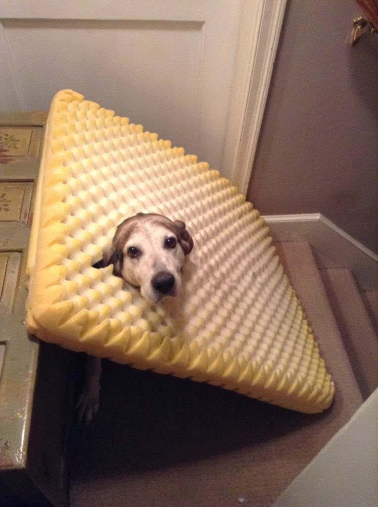Cute dogs - part 6 (50 pics), dog stuck his head on bed foam