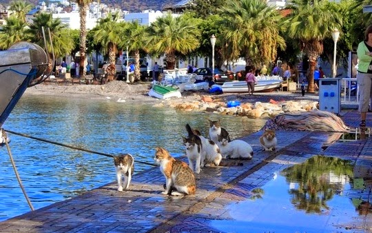 traveling with cats bodrum