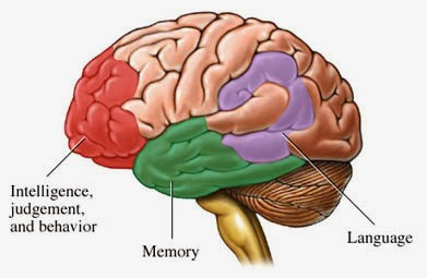 Drugs to enhance brain function photo 3