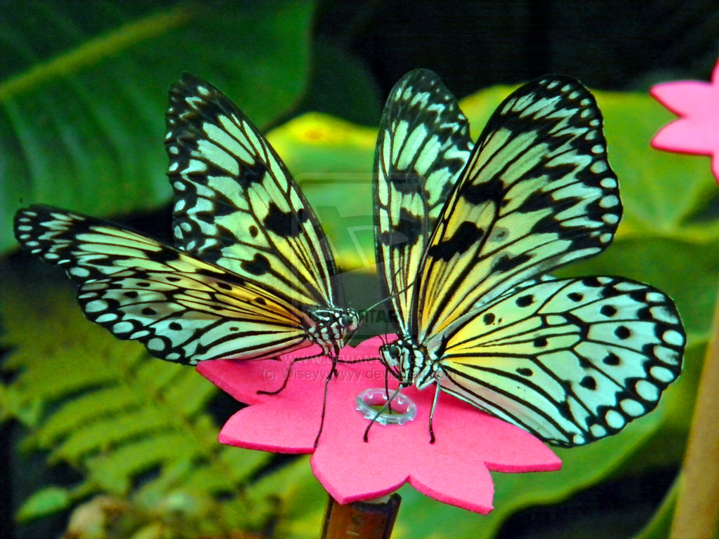 News Butterfly: Beautiful Butterfly Pictures
