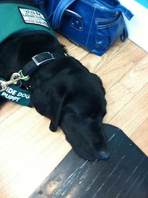 Foley asleep on the salon floor