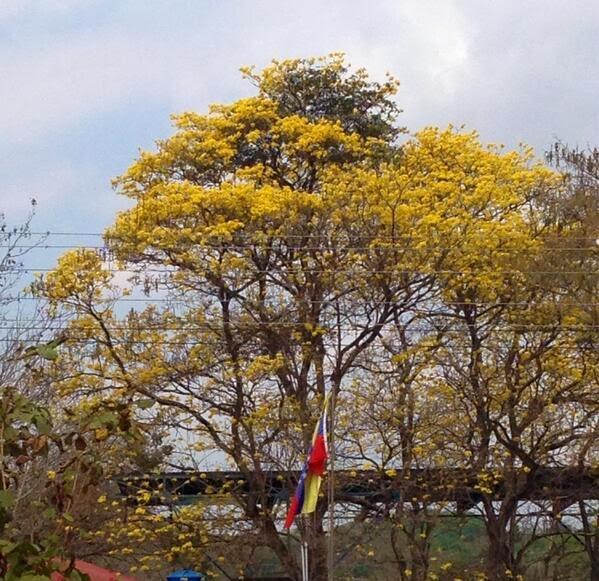 NUESTRO ARAGUANEY