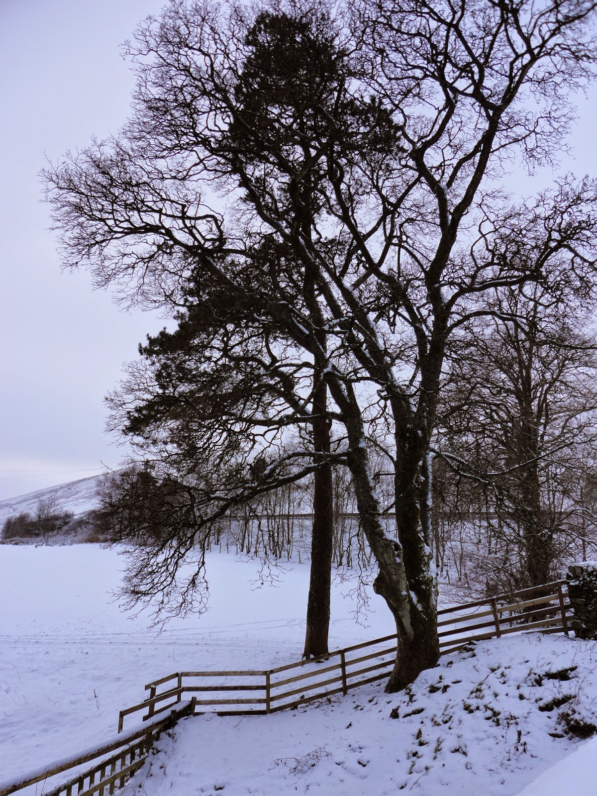 country farm landscape with trees, hills and snow in winter in scotland