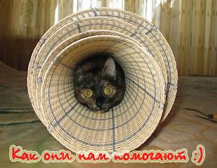 """Галерея постов о мохнатых """"помощниках"""". Читайте, улыбайтесь, присоединяйтесь! )))"""