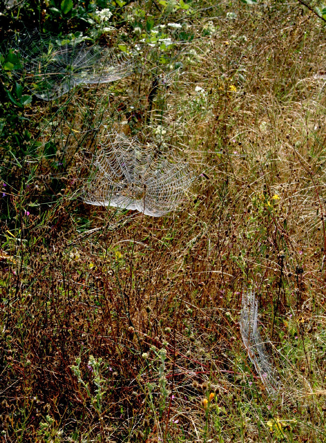 Three spiders webs