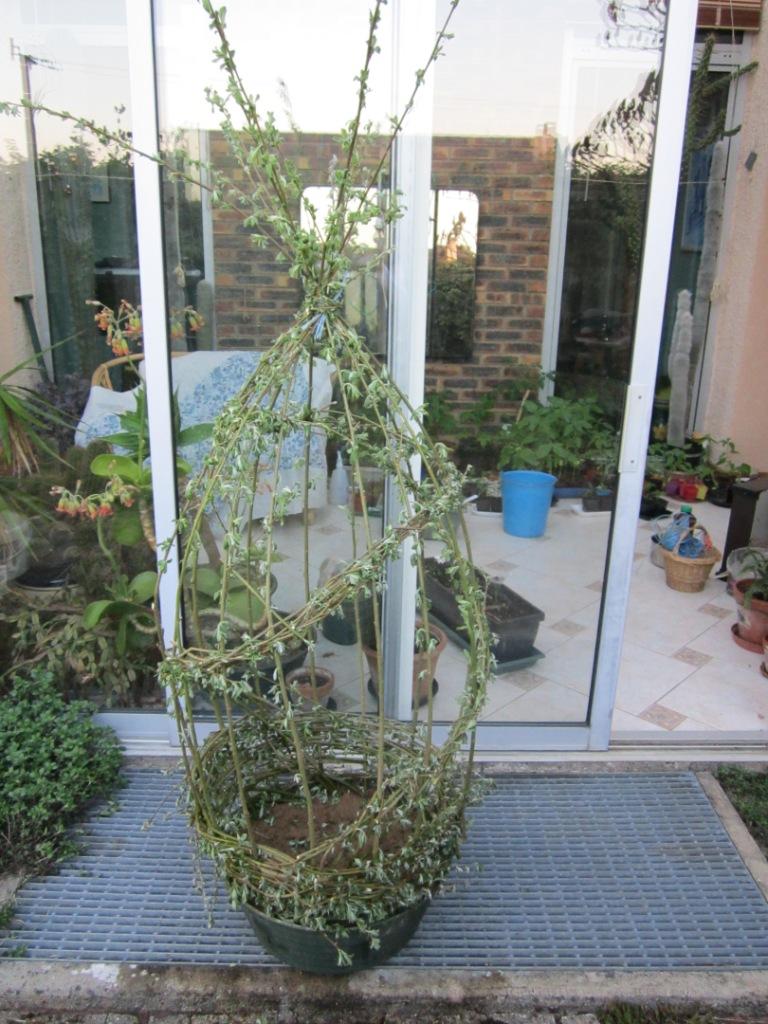 Il s'agit de jeunes branches de saule marsault ou de saule blanc que ...