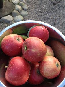 Äpplen från trädgården