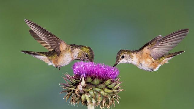 ايلاء الاهتمام الكافي لتكوين الصورة لحظة تصوير الطيور
